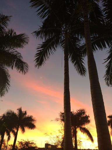 miami, florida, sunset, sunrise. the best dress up